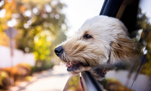 Tim Dowling: hallelujah, the dog's gone on holiday