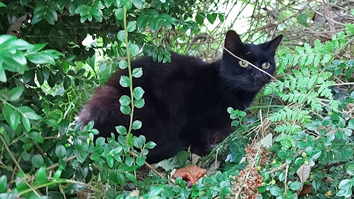 Cat's Meows Lead Rescuers To 83-Year-Old Owner Who Fell Into Ravine
